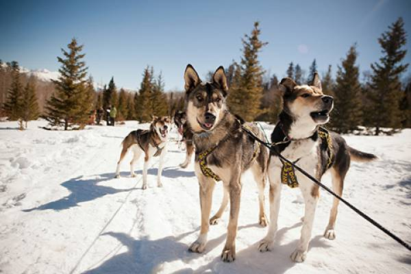 Dog Sledding in Telluride
